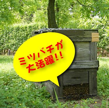 なつめ農園ではみつばちを授粉に使っています